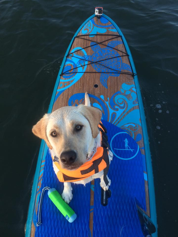 pet-friendly SUP, pet friendly paddleboard, ocean city nj pet friendly,